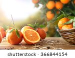Oranges Group Freshly Picked I...