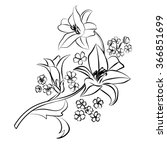 lily sketch. black outline on... | Shutterstock .eps vector #366851699
