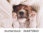 Stock photo cute puppy sleeping with his paws up on a knitted sweater cozy winter at home instagram filter 366870863
