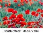 closeup red poppy field | Shutterstock . vector #366879503