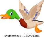 Duck Illustrations and Clipart 24359 Duck royalty free