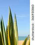 Small photo of Closeup of Sisal or Agave sisalana green leaves copy space background