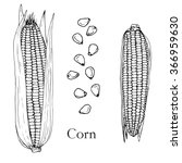 corn cobs and seeds  ink... | Shutterstock .eps vector #366959630