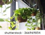 flowerpots hanging on window... | Shutterstock . vector #366969854