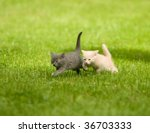 Stock photo two kittens running through the grass and playing 36703333