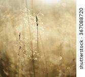 misty morning field close up | Shutterstock . vector #367088720