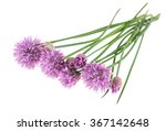 Chives With Flowers Isolated O...