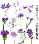 set of lilac wild flowers... | Shutterstock . vector #367181819