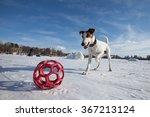 Dog English Breed Jack Parson...