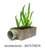 Aloe Vera Small Plant Cactus I...