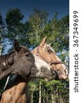 two horses nuzzle against a... | Shutterstock . vector #367349699