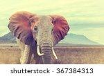 Wild African Elephant. Vintage...