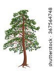Pine Tree Vector Isolated On...