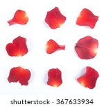 red rose petals isolated on... | Shutterstock . vector #367633934