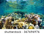 reef and coral  red sea  sudan. | Shutterstock . vector #367696976
