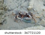 Crab Eating Fish In Shallow...