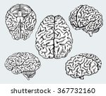 hand drawn human brains. vector ... | Shutterstock .eps vector #367732160