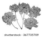 5 grey roses  | Shutterstock . vector #367735709