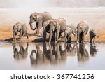 family of african elephants... | Shutterstock . vector #367741256