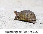 Stock photo box turtle 36775765