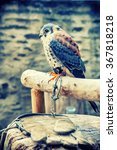 Small photo of American kestrel (Falco sparverius) sitting on a perch