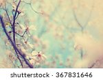 blossom tree over nature... | Shutterstock . vector #367831646