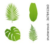 Set Of Tropical Leaves. Palm...