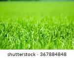 close view of green field of... | Shutterstock . vector #367884848
