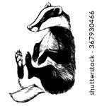 european badger   animal... | Shutterstock .eps vector #367930466