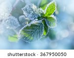 the frost on the leaves | Shutterstock . vector #367950050