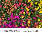 Colorful Meadow Of Flowers...