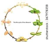 life cycle silk worm vector | Shutterstock .eps vector #367978358
