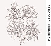 vector peony flower isolated on ...