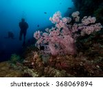 divers behind some soft coral