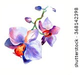 the new view of orchid... | Shutterstock . vector #368142398