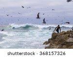 Monterey  California   4...