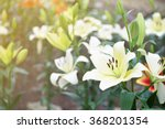 white lily flower background | Shutterstock . vector #368201354