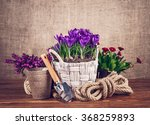 spring flowers in basket with... | Shutterstock . vector #368259893