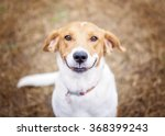 Stock photo smiling dog 368399243