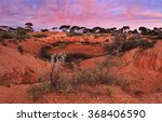 Dried Water Hole In Red Soil O...