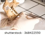Human Jaw Fossil