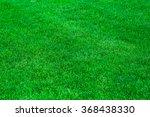 lush green grass lawn | Shutterstock . vector #368438330
