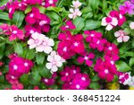 Small photo of foliage vinca flowers