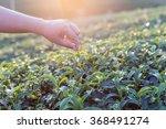 close up woman hand on tea...   Shutterstock . vector #368491274