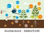 flat design marijuana growing... | Shutterstock .eps vector #368625140