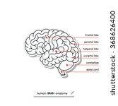 vector human brain views.... | Shutterstock .eps vector #368626400