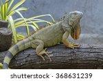 Iguana  Iguanidae  Prehistoric...