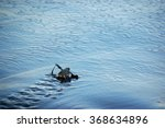 turtle baby reaching ocean | Shutterstock . vector #368634896