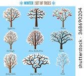 Set Of Winter Trees On White...