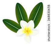 plumeria frangipani flower with ... | Shutterstock .eps vector #368830658